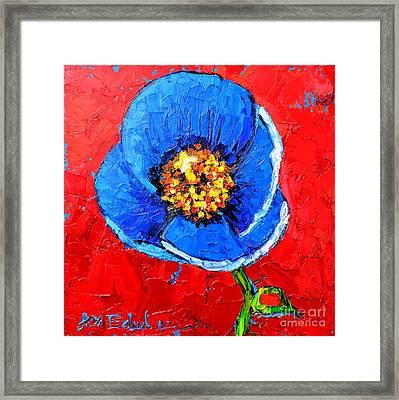 Blue Tibetan Poppy Framed Print by Ana Maria Edulescu