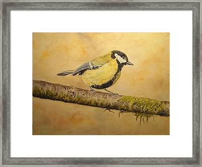 Blue Tit Framed Print by Juan  Bosco