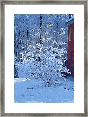 Blue Tree Framed Print by Mitchell Gibson