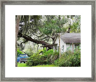 Blue Truck And Moss Framed Print by Patricia Greer