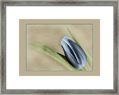 Blue Tulip Framed Print by Philip  Butler