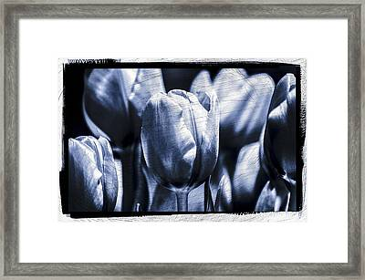 Framed Print featuring the photograph Blue Tulips by Craig Perry-Ollila