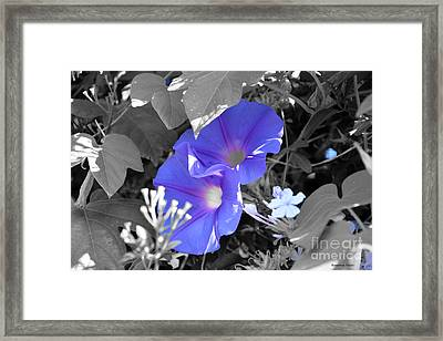 Blue Twins Framed Print by Ramona Matei