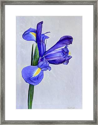 Blue Valentine Framed Print by Heidi Smith