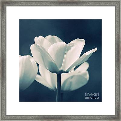 Blue Velvet Framed Print by Angela Doelling AD DESIGN Photo and PhotoArt