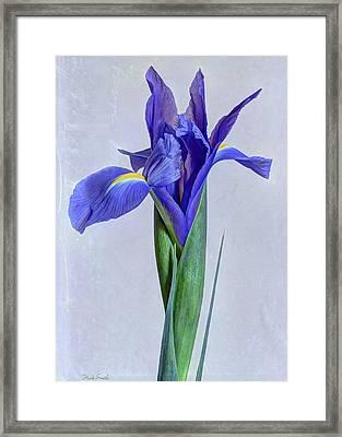 Blue Velvet Framed Print by Heidi Smith