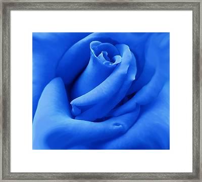Blue Velvet Rose Flower Framed Print by Jennie Marie Schell