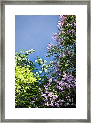 Blue Wall With Flowers Framed Print by Elena Elisseeva
