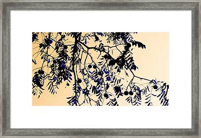 Blue Walnuts Framed Print by Tina M Wenger