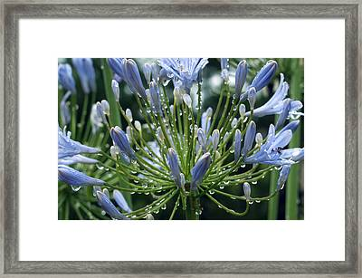 Framed Print featuring the photograph Blue Water Drops - 2 by Haleh Mahbod
