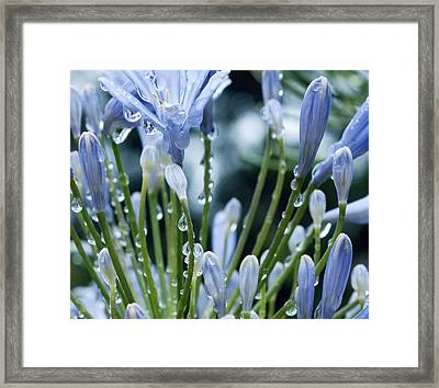 Framed Print featuring the photograph Blue Water Drops -3  by Haleh Mahbod