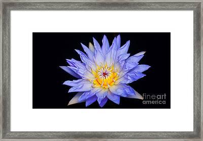 Blue Water Lily Blast...   #   V Framed Print by Rob Luzier