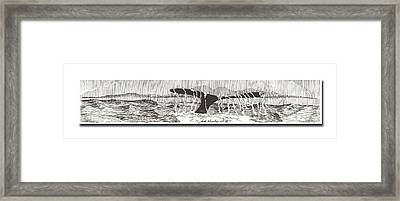 Whales Tail Framed Print by Jack Pumphrey