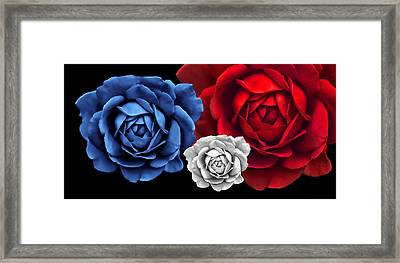 Blue White Red Roses Abstract Framed Print by Jennie Marie Schell