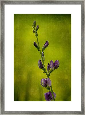 Blue Wild Indigo With Textures Framed Print
