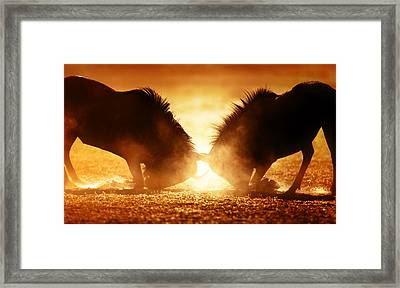 Blue Wildebeest Dual In Dust Framed Print