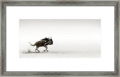 Blue Wildebeest In Desert Framed Print