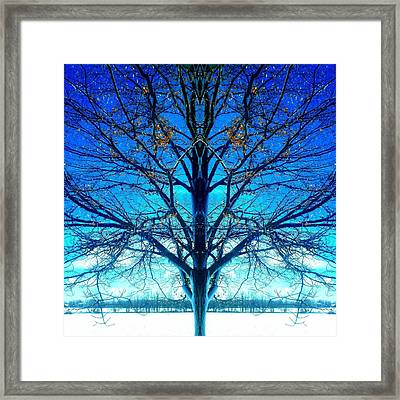 Blue Winter Tree Framed Print