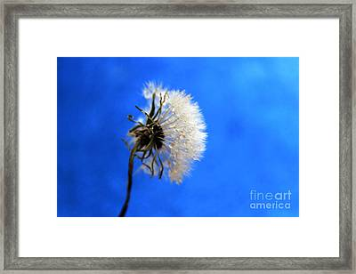 Blue Wish Framed Print by Krissy Katsimbras