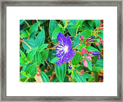 Blue With Dew Framed Print by Van Ness