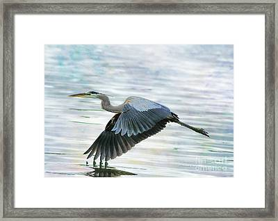Blue With Grace And Beauty Framed Print