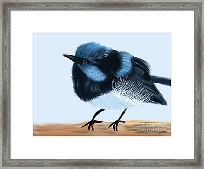 Blue Wren Beauty Framed Print