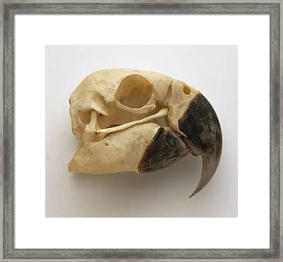 Blue Yellow Macaw Skull Framed Print by Dorling Kindersley/uig