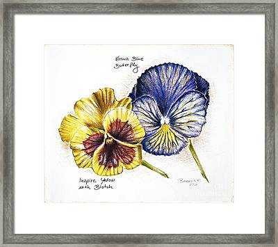 Blue Yellow Pansies Framed Print by Katharina Filus