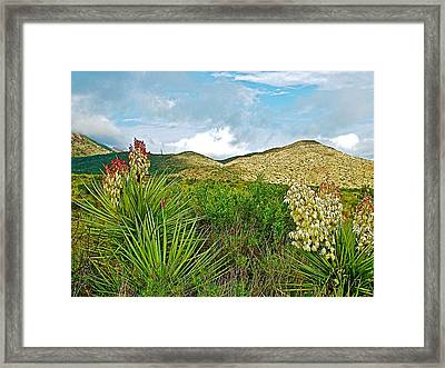 Blue Yucca And Chisos Mountains In Big Bend National Park-texas Framed Print by Ruth Hager