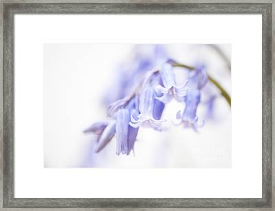 Bluebell Abstract IIi Framed Print