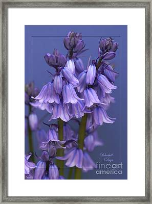 Bluebell Days Framed Print
