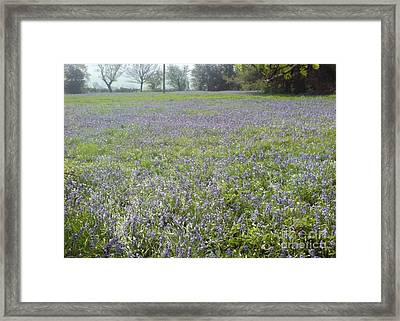 Bluebell Fields Framed Print