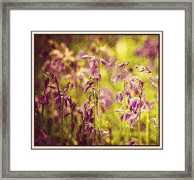 Bluebell In The Woods Framed Print