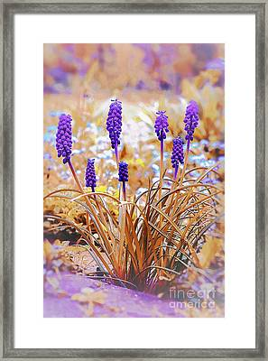 Bluebell Magic Framed Print by Donald Davis