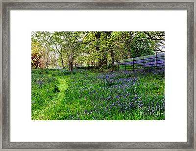 Bluebell Way Framed Print