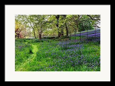 Bluebell Digital Art Framed Prints