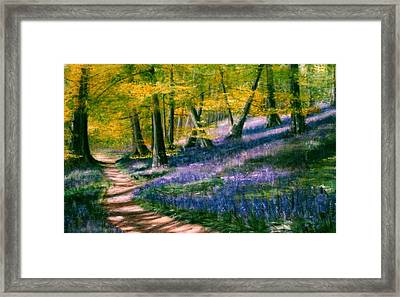 Bluebell Wood Framed Print by Lynn Hughes