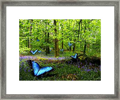 Bluebell Wood Framed Print