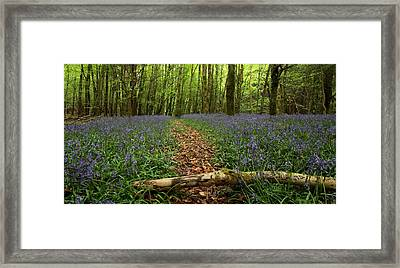 Bluebell Woods Framed Print by Peter Skelton