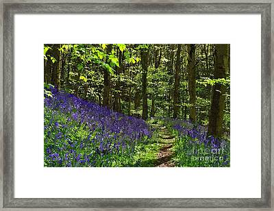 Bluebell Woods Photo Art Framed Print