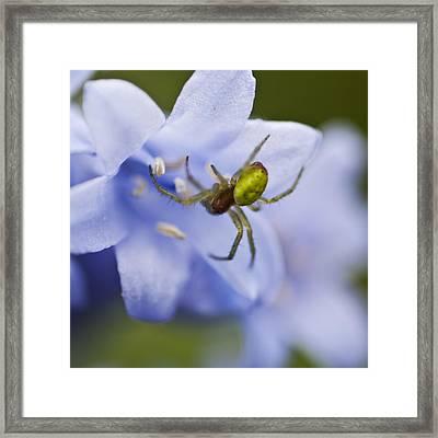 Bluebells 7 Framed Print by Steve Purnell