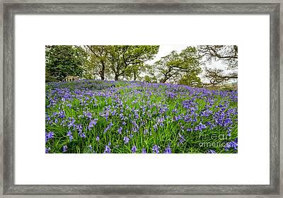 Bluebells Framed Print by Adrian Evans