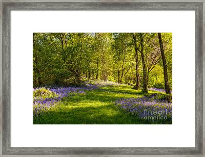 Bluebells Framed Print by Amanda Elwell