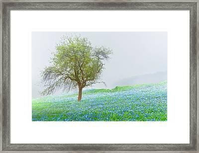 Bluebells Framed Print by Debra and Dave Vanderlaan