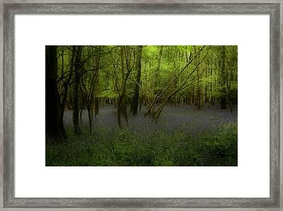 Bluebells Dream Framed Print by Peter Skelton