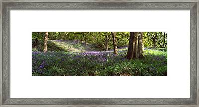 Bluebells In A Forest, Newton Wood Framed Print by Panoramic Images