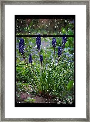 Bluebells In The Rain Framed Print by Donald Davis