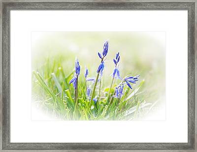 Bluebells On The Forest Framed Print by Natalie Kinnear