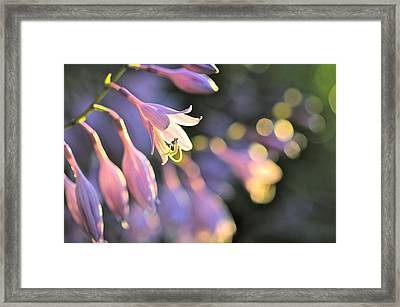 Bluebells Framed Print by Tracy Male