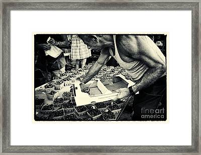 Blueberries At The Market New York City Framed Print by Sabine Jacobs